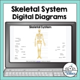Skeletal System Diagrams for Distance Learning