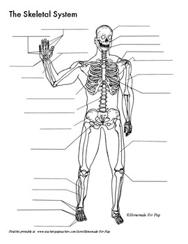 Skeletal System Diagrams for Labeling, With Reference Information and ChartsTeachers Pay Teachers