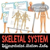 Skeletal System Student-Led Station Lab