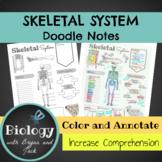 Skeletal System Doodle Notes
