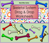 Skeletal System - Drag & Drop Worksheets (Med Bite Series)