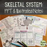 Skeletal System PowerPoint & Illustrated Notes