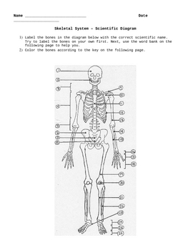 Skeletal System - Exam, Notes, and Activities