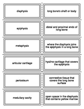 Introduction to the Skeletal System Vocabulary Flash Cards for Anatomy