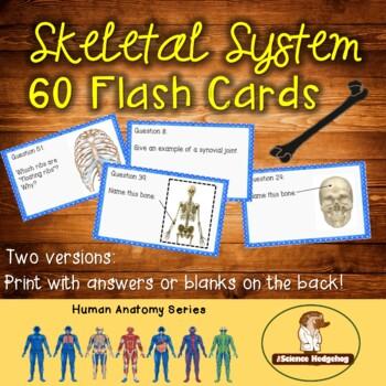 Skeletal System Flash Cards