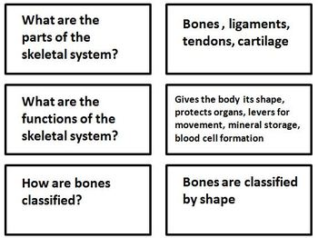 Skeletal System Flashcards