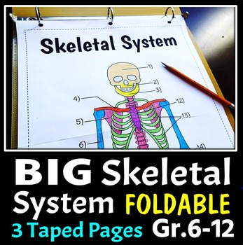 Skeletal System Foldable - Big Foldable for Interactive No