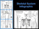 Skeletal System Infographic