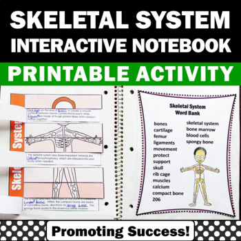 Skeletal System Foldable Interactive Science Notebook Acti