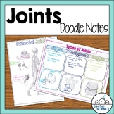 Skeletal System Guided Notes - Joints Doodle Notes