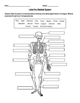 Skeletal System Labeling