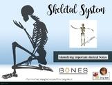 Skeletal System Labeling Activity