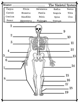 Skeletal System Labeling Activity/Quiz by HealthyLessons | TpT