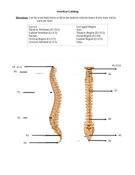 Skeletal System Labeling Test