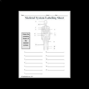 Skeletal System Labeling Worksheet By Techcheck Lessons Tpt