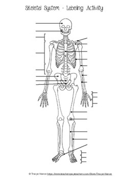 skeletal system labeling worksheet skeletal system labeling worksheet