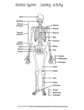 Skeletal System Labeling worksheet