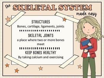 Skeletal System Made Easy