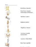 Skeletal System Matching