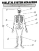 ACTIVITY : Skeletal System (Measurement)