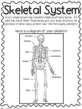 Skeletal System Model by The Applicious Teacher | TpT