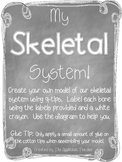 Skeletal System Model
