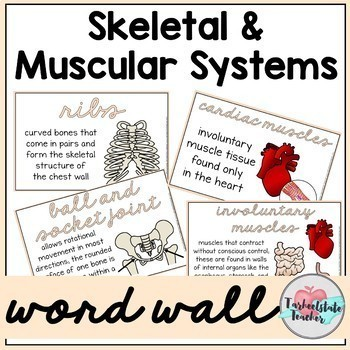 Skeletal System | Muscular System Vocabulary Bundle