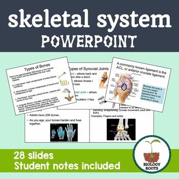 Skeletal System Notes