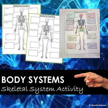 Skeletal System Notes Outline