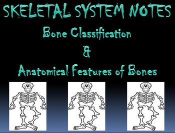 Skeletal System Notes Bone Classification & Features Powerpoint Presentation