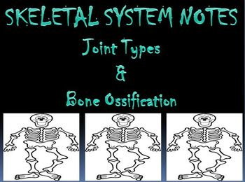 Skeletal System Notes Types of Joints & Ossification Powerpoint Presentation