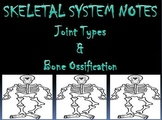 Skeletal System   Types of Joints & Ossification PowerPoint Presentation