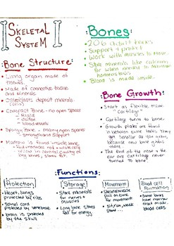 Skeletal System One-Pager