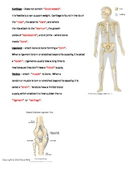 Skeletal System Open Notes with KEY