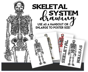 Skeletal System Poster- Use as Handout or Enlarge to Poster!