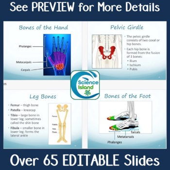 Skeletal System PowerPoint Lesson and Notes - Anatomy & Physiology Power Point