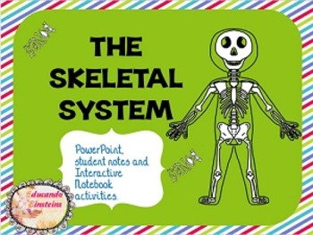Skeletal System PowerPoint, Notes and Interactive Notebook activities FREEBIE