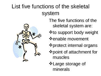 Skeletal System Ppt And Notes Worksheets & Teaching Resources | TpT