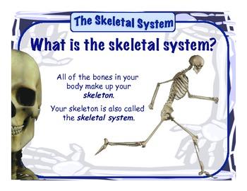 Skeletal System - Presentation