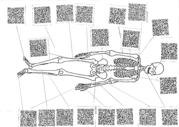 Skeleton / Skeletal System QR Code Activity Sheet