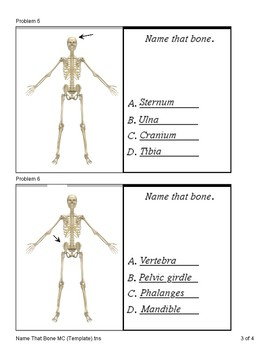 Skeletal System (Quiz)