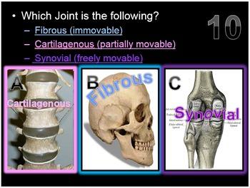 Skeletal System Quiz PowerPoint