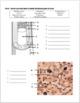 Skeletal System Review Worksheet