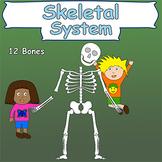 Skeletal System (Skeleton and bones)