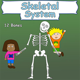 Skeletal System (Skeleton and bones)