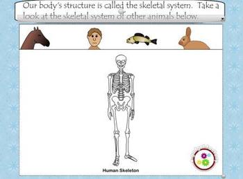 Skeletal System Smart Board Lesson