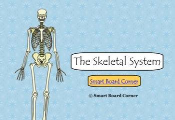 Skeletal System Smart Board Lesson