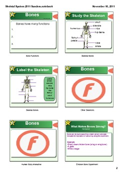 Skeletal System Smartboard Bones and Joints with Experiment