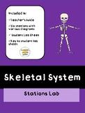 Skeletal System Stations Lab