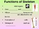 Skeletal System Student Fill-in Notes